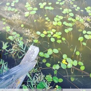 Biržu ezers
